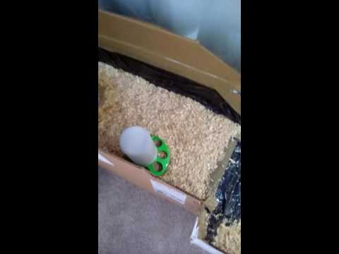 3. Tiny Duckies Get A Bigger House