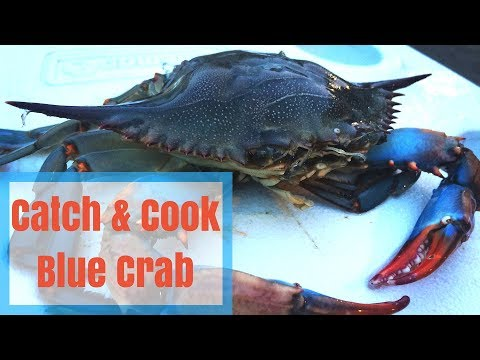 Catch & Cook Blue Crab - How to Keep Crab Meat Fresh for Days