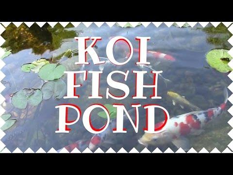 Koi Fish Pond - Why do I love mine you ask?