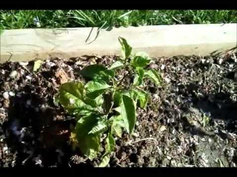 Mike Jewel's Garden Vlog: 2013 Part 6