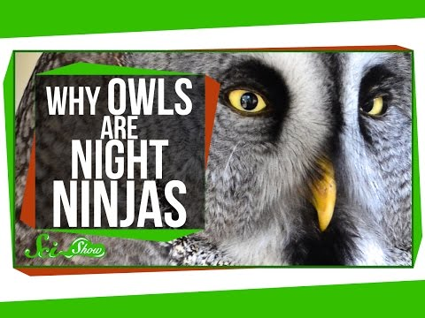 Why Owls Are Night Ninjas