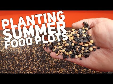 How & What to Plant for Deer in Summer Food Plots