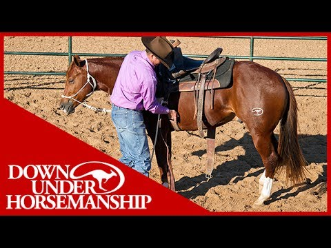 Clinton Anderson: An Overview of Starting a Colt - Downunder Horsemanship