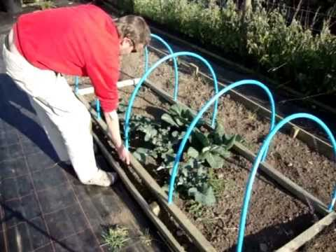 How to make a Portable Netted Hooped Crop & Plant Protecting Cloche.Keeps out Birds & Butterflies