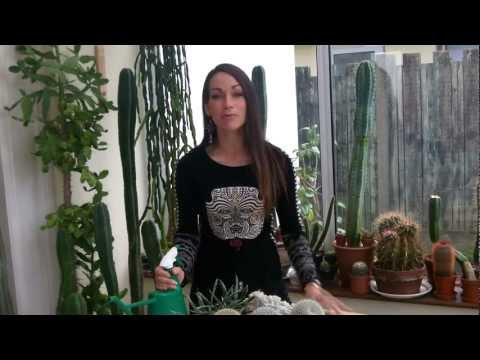 Why you should use Rainwater on  your house plants