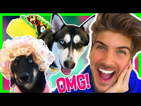 PLAYING DRESS UP WITH MY DOGS!