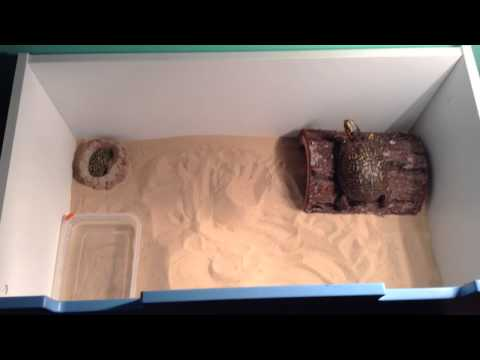 How To Make A Box Turtle Tank In Under 75$