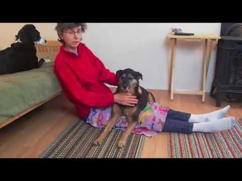 Service Dog Anxiety Tasks Online Class
