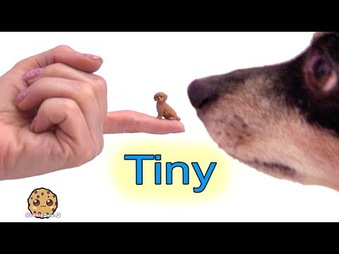 Small Dogs ! Tiny Puppy Dog Surprise Blind Bags Cookie Swirl C Video