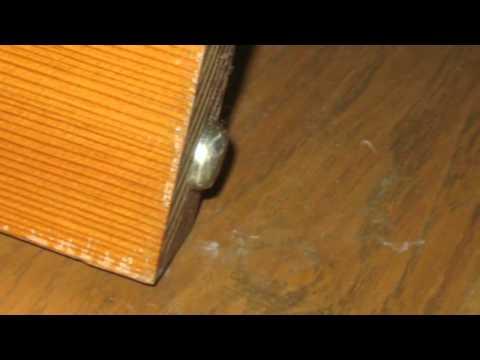 What Happens When You Don't Remove Metal Tabs Off Door Bottom? - Floor Damage