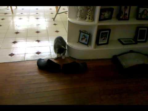 Bootsie the kitty high on cat weed (CATNIP)