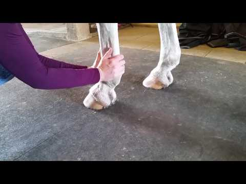 The fast daily leg inspection - keep your horse's legs healthy!