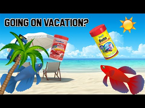 HOW TO CARE FOR YOUR BETTA DURING VACATION!