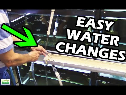 How To Do Water Changes in your Aquarium Fish Room.