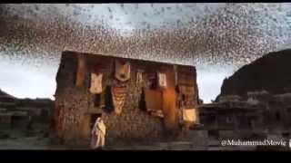 Muhammad The Messenger Of God _ ababil bird_ HD _ Majid Majidi