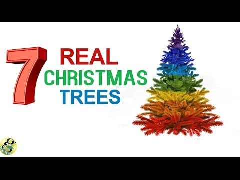 7 REAL CHRISTMAS TREES TO CHOOSE THIS CHRISTMAS 2017 with Names | Living Christmas Plants