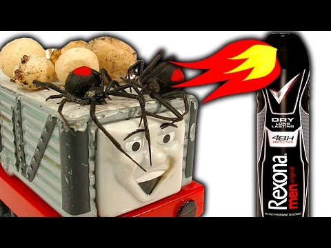 Redback Spiders Troublesome Infestations Flamethrower Effective Spider Control