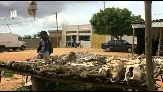 Huehner fuer Afrika - Vom Unsinn des globalen Handels