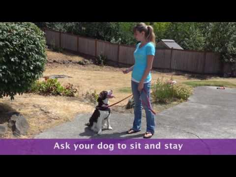 How To Stop a Dog From Jumping : Give A Command