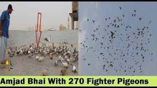 Musib Siddique And Syed Masood K Lartey Hovey 270 Gola Kabootar - Pigeons Loft