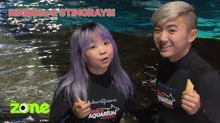RikiMisu Swim With Stingrays | The Zone