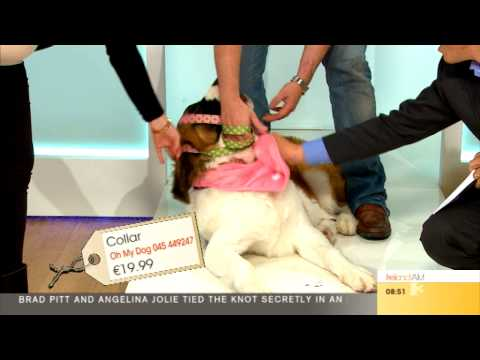 Dog Fashion - Oh My Dog | Ireland AM