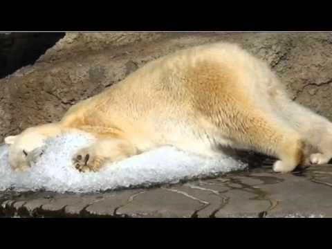Help Save the Polar Bears from Global Warming!
