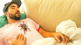 Download Black Widow PRANK ON BROTHER WILL IT BITE?! Video