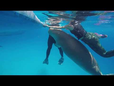Dugong Humping and Pumping in the Ring of Fire!