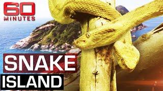 The deadliest place on earth: Snake Island | 60 Minutes Australia