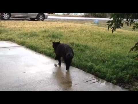 Lost cat in the rain