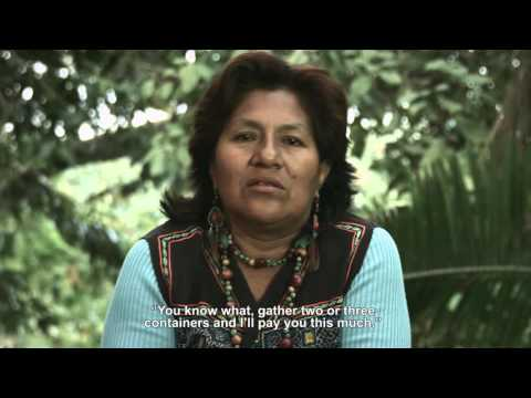 Indigenous Community Forest Enterprise in the Peruvian Amazon