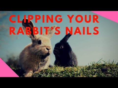 Clipping Your Rabbit's Nails