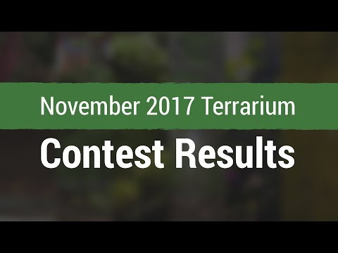 November 2017 Terrarium Contest Results!