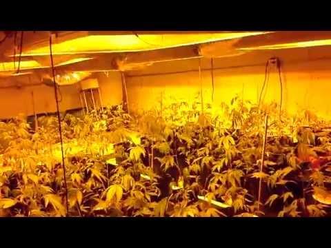 Indoor grow flowering room 01