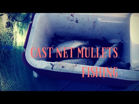 Cast net: how to catch a lot of fishes with no skill or pancake required
