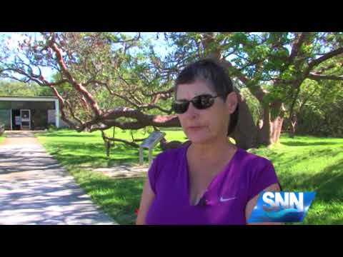 SNN; The nation's largest Gumbo Limbo Tree will be removed