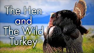 The Fable Of The Hen And The Wild Turkey