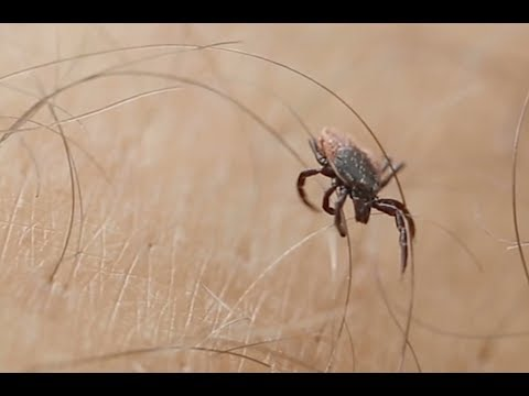 Thermacell Tick Control Tubes: Kill Ticks, Prevent Lyme Disease