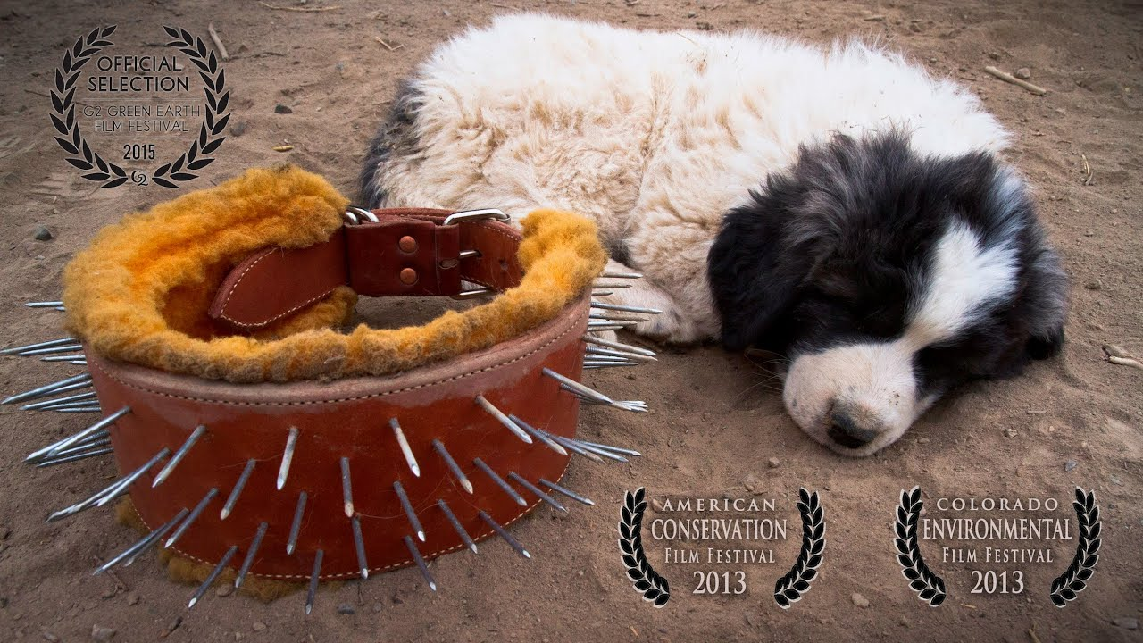 Livestock Guardian Dogs: Working on Common Ground - People & Carnivores