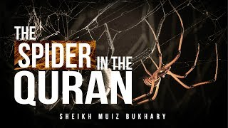 Science Confirms Quranic Claim - Weakest Homes Are That Of Spiders!