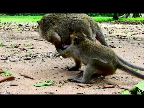 OMG. Painful for Newborn baby Polly , DeDe pull Newborn baby Polly from mom Popeye ,