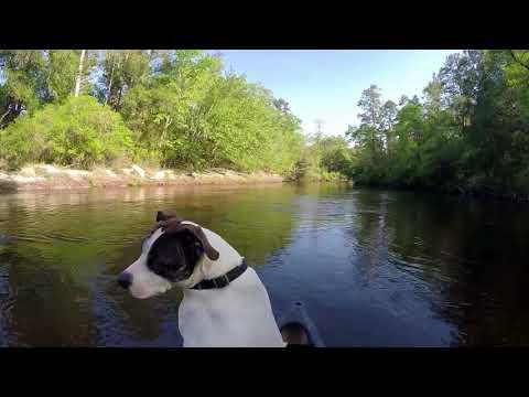 Blackwater Joe's Canoes | Cabins | Camping on the Blackwater River