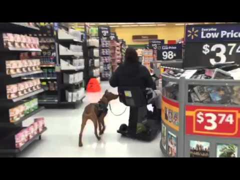 Service dog training in walmart