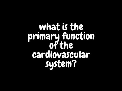 What Is The Primary Function Of The Cardiovascular System?