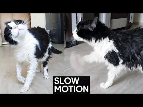 Shaking. Slow Motion
