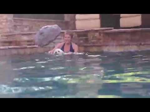 Watson The Three Legged Dog - Summer Of Swimming