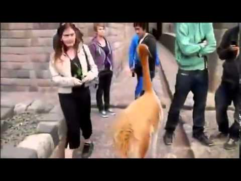 Image of: Jokes Comedy Clips Downloads Sms Funny Jokes In Hindi Funny Clips Videos Download Funny Video Free Downloa Fun Music Bandbreaking News Bloggercom Full Comedy Sms In Hindi Full Sms