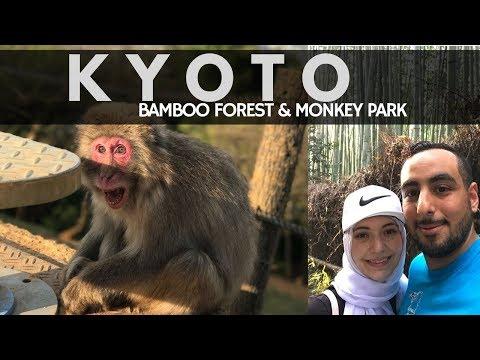 Kyoto Japan Travel Guide Vlog | Arashiyama Monkey Park & Bamboo Forest