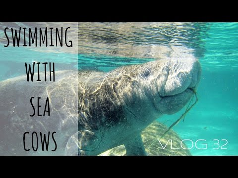 Swimming with Manatees - An Experience We Will Not Forget | MOTM VLOG #32